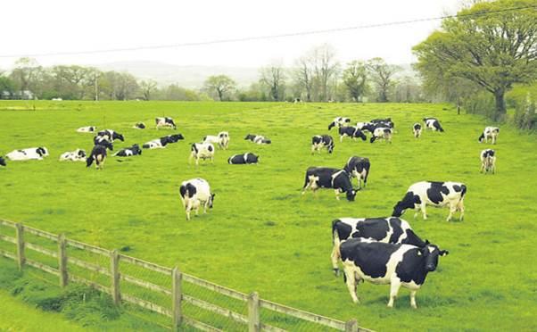 Formalin dùng ngâm móng bò sữa